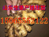 山东大姜产地批发价格 生姜种植 生姜价格 生姜批发