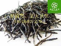 苦丁茶提取物_苦丁茶粉|优质现货