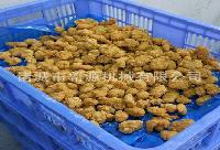 连续式全自动鸡米花裹粉机生产线