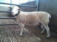 供应济宁肉驴养殖场母驴肉驴育肥品种