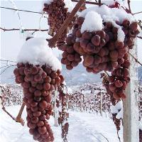 葡萄原汁收汁压榨机 干红葡萄酒挤压过滤 果蔬酵素过滤收汁压榨机