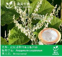现货供应 白藜芦醇98% 虎杖提取物 日本蓼 全国包邮
