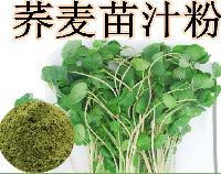 荞麦苗粉 荞麦苗汁粉  荞麦苗提取物   沃特莱斯长期供应