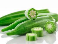 珠海宏鸿农产品蔬菜食材配送一站式采购配送食堂配送服务--秋葵
