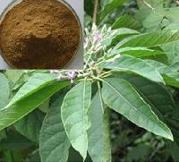 黃秋葵提取物 黃秋葵浓缩粉 黄秋葵浸膏粉 黄秋葵萃取物