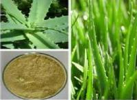 芦荟提取物 芦荟甙20%-40% *芦荟浸膏粉 浓缩粉 萃取粉