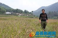 胭脂稻种子500gx1
