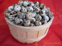 广西无污染纯原生态农产品壮乡鹌鹑蛋