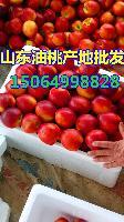 大棚油桃价格,山东油桃批发价格是多少