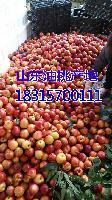 现在油桃多钱一斤?大棚油桃批发价格查询详细