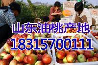 今日大棚油桃价格 *油桃批发价格行情稳定