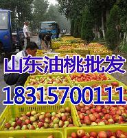 今日大棚油桃价格 *油桃批发价格详细报道