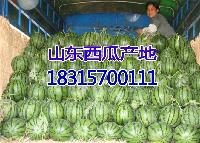 甜瓜批发价格是多钱一斤产的甜瓜便宜