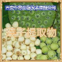 莲子提取物厂家生产莲子水溶粉