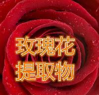 玫瑰花提取物 厂家供应天然提取物玫瑰花粉