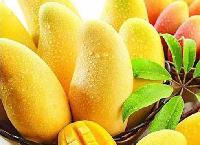 供应以色列进口浓缩芒果汁 印度阿方索芒果原浆