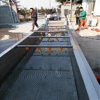 大型气泡洗鱼机|海鱼清洗机|沿海城市专用清洗机