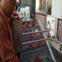 供应浩顺蔬菜清洗机/蔬菜喷淋清洗机/304不锈钢清洗设备