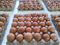 保洁蛋生产线到哪里买