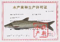 供应银鳕鱼鱼苗