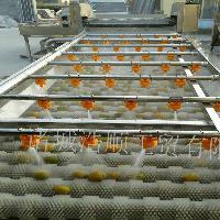 供应玉米清洗机 优质蔬菜除杂机 高压喷淋清