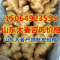 山东大姜产地在哪里,生姜批发价格是多少