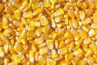 大量供應優質玉米粒