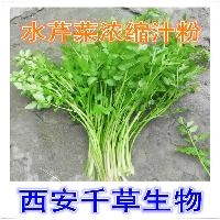 水芹菜纯天然提取物水芹菜浓缩粉