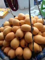 云南蒙自甜枇杷 新鲜水果 枇杷果琵琶果