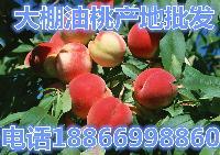 最近油桃什么价格?最新今日【油桃批发价格】产地报价