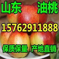 山东油桃便宜质量
