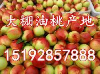 山东省暖棚油桃价格详细报价 今年暖棚油桃产地批发价格