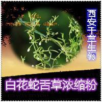 白花蛇舌草浓缩粉厂家生产白花蛇舌草提取物