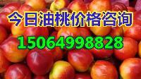 今日油桃价格,山东大棚油桃批发价格