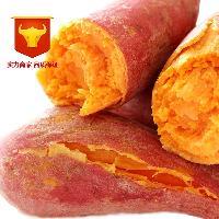 一件代发山东特产优质沙地红薯蒸煮专用