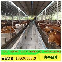 改良牛小黄牛犊 肉牛犊多少钱 免费专车运输