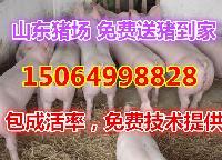 *的2017年山东仔猪价格