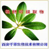 枇杷叶粉天然原料提取传统工艺厂家直销