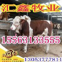 生长最快的肉牛品种夏洛莱牛