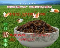 批发洋县紫米糙米 精美八宝饭米 产地厂家直销