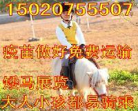 6个月马匹哪里有卖的