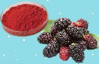 食品级桑葚红色素价钱