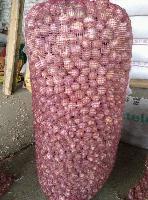 优惠促销大蒜种子
