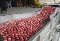 多功能蔬菜清洗机,蔬菜清洗机厂家