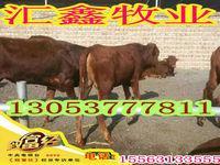 出售牛犊多少钱一头夏洛莱牛