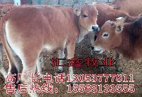 买小牛犊多少钱买小牛犊母牛