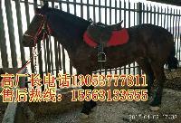 辽宁省毛驴多少钱一斤牛犊子