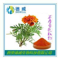 万寿菊提取物-天然色素叶黄素 专业天然色素供应商