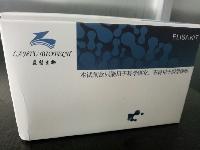 410001兔睾酮(T)定量检测试剂盒(ELISA)