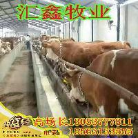 重庆那里能买到小牛犊母牛